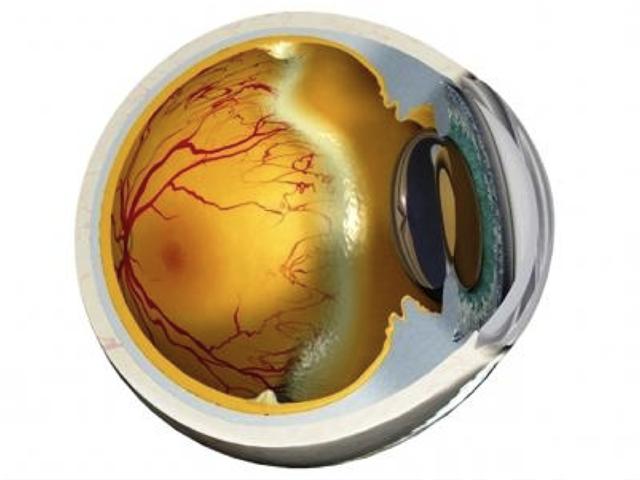 Инфракрасный свет может предотвратить развитие ретинопатии недоношенных